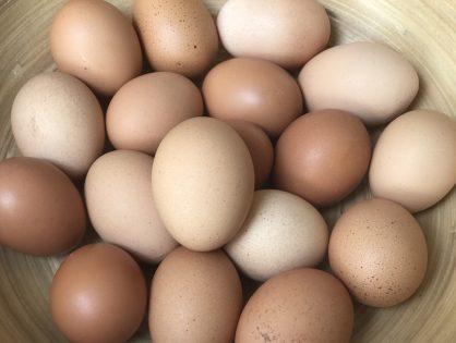 eieren koken + ei weetjes