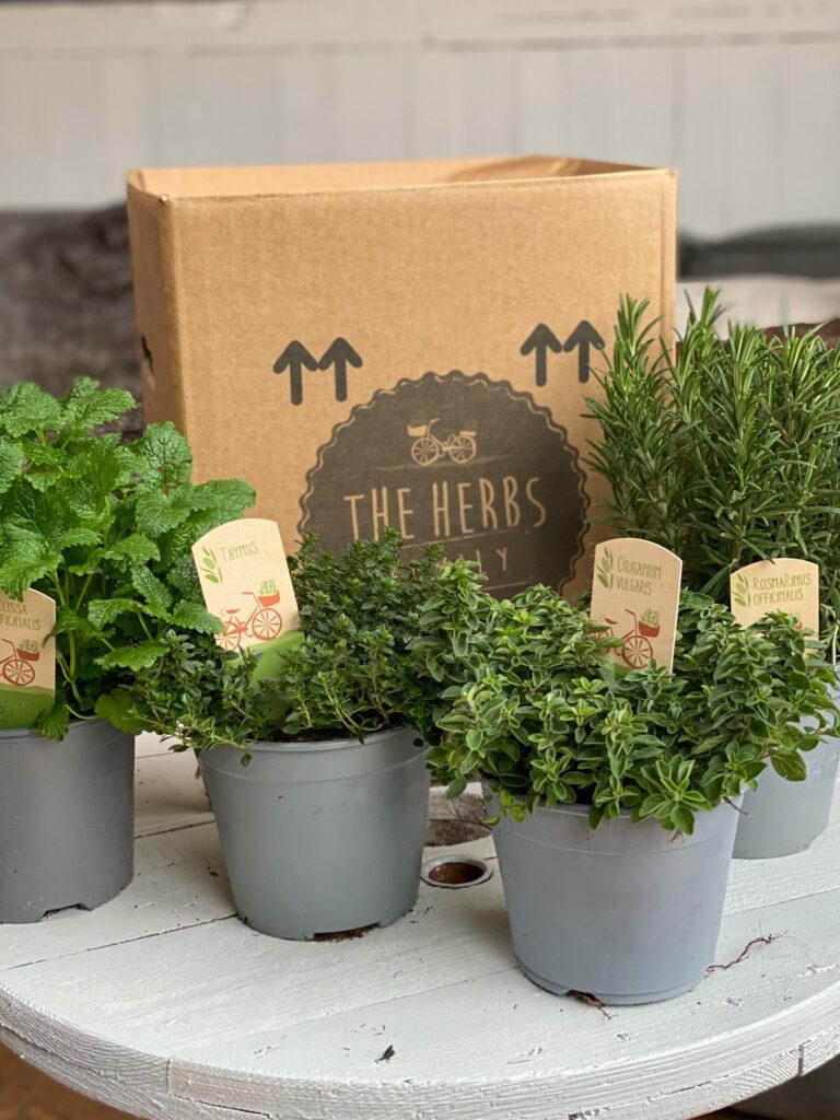 kruiden online bestellen bij The Herbs Family